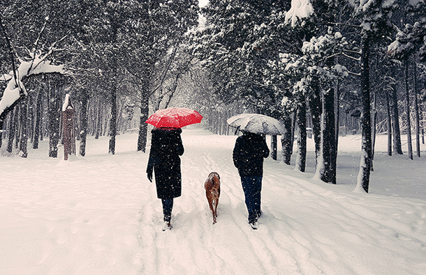 Couple walking the snow in the woods