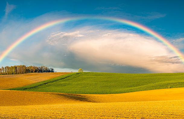 Rainbow over fields of yellow flowers