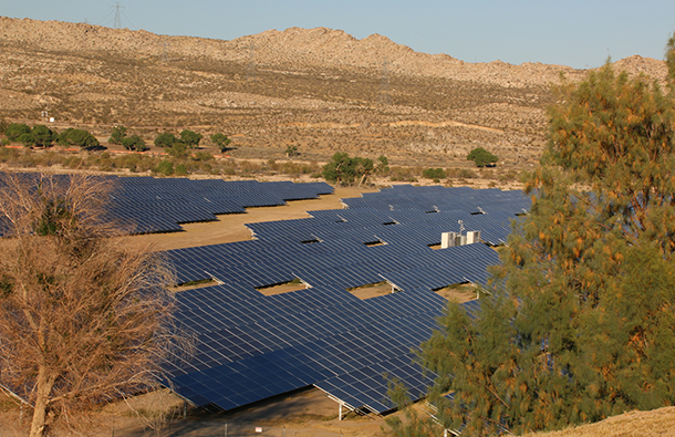 Solar panels in a desert with green foliage around them