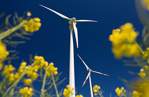 Looking up at a wind turbine from the ground, surrounded by pretty yellow flowers