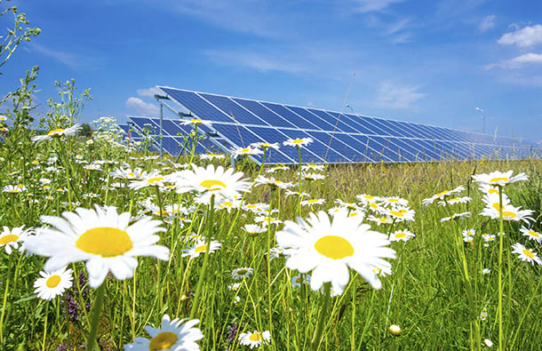 Solar panels in a field of daisies.