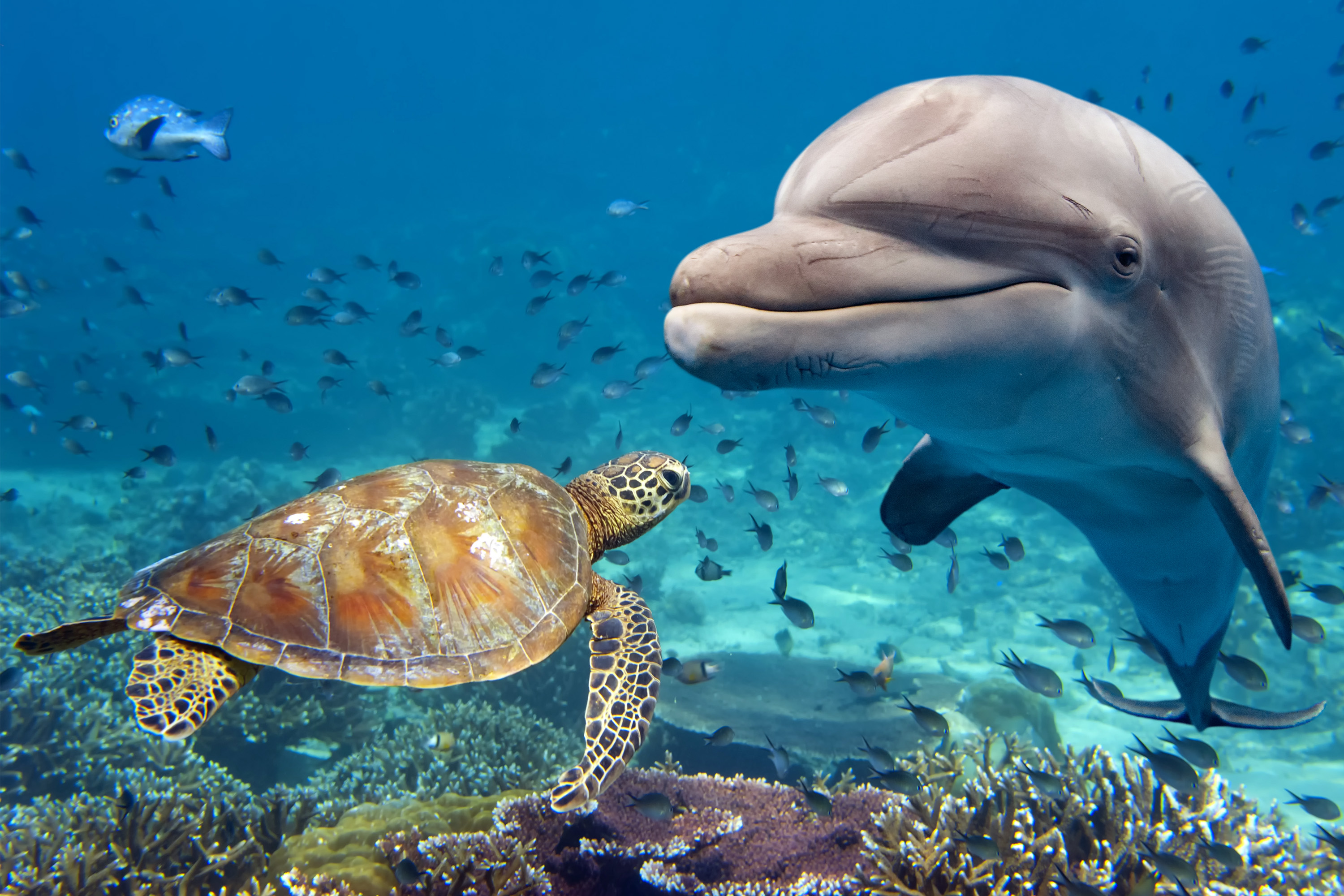 A dolphin and sea turtle swimming past a coral reef.